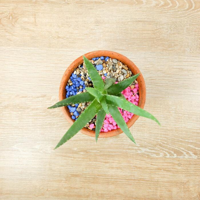 plantas Bogotá plantas suculentas Bogotá