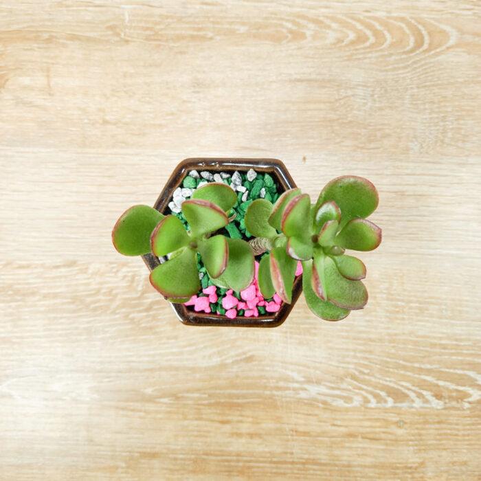 vivero de plantas macetas decoradas