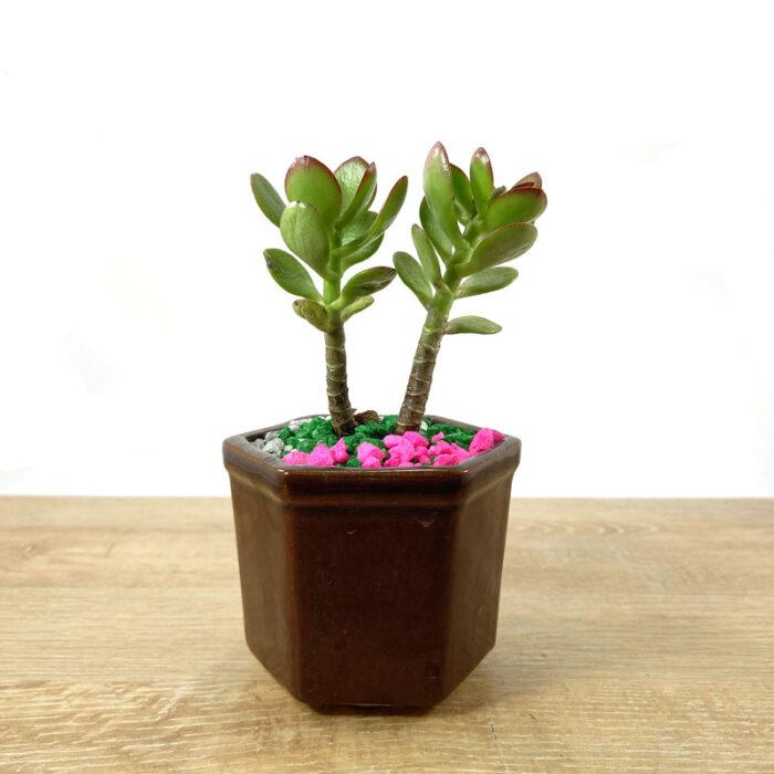plantas decorativas viveros Bogotá