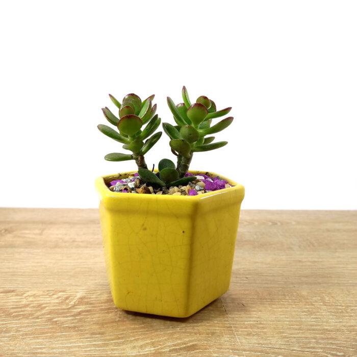 jardines con suculentas cactus y suculentas