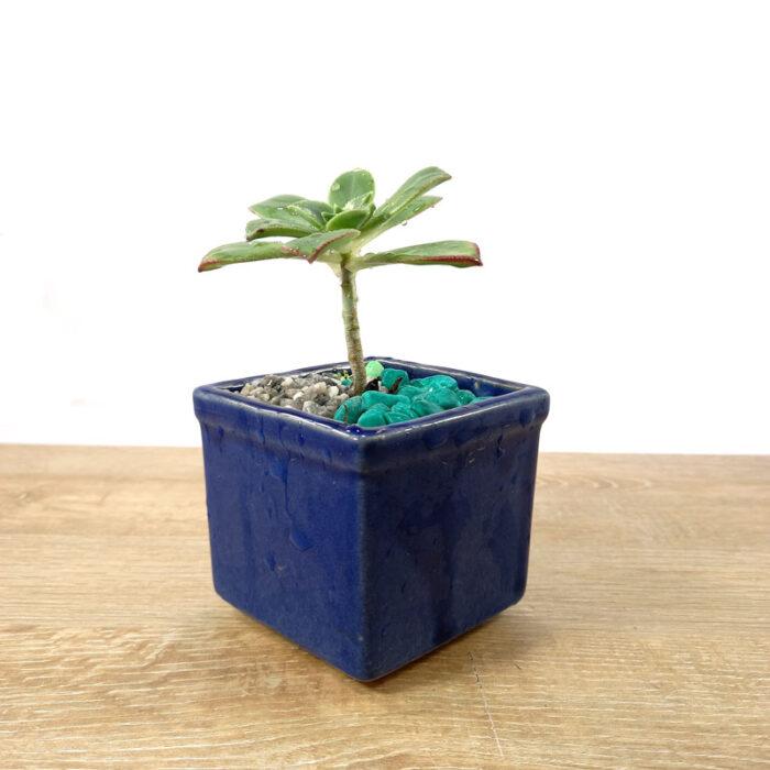 como decorar una maceta Bancolombia ciudad jardín