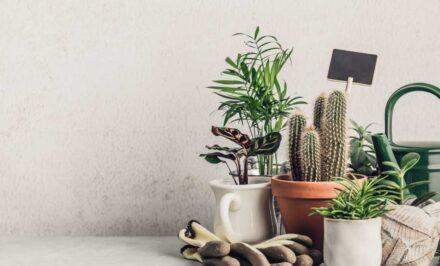 Cactus vivero online bogota
