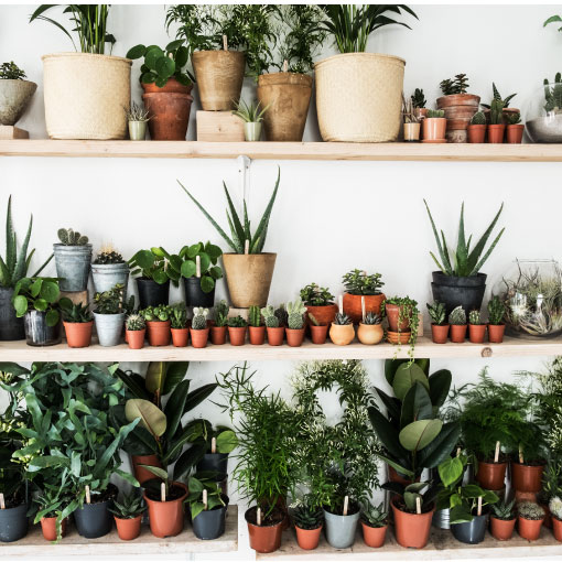 cactus bogota