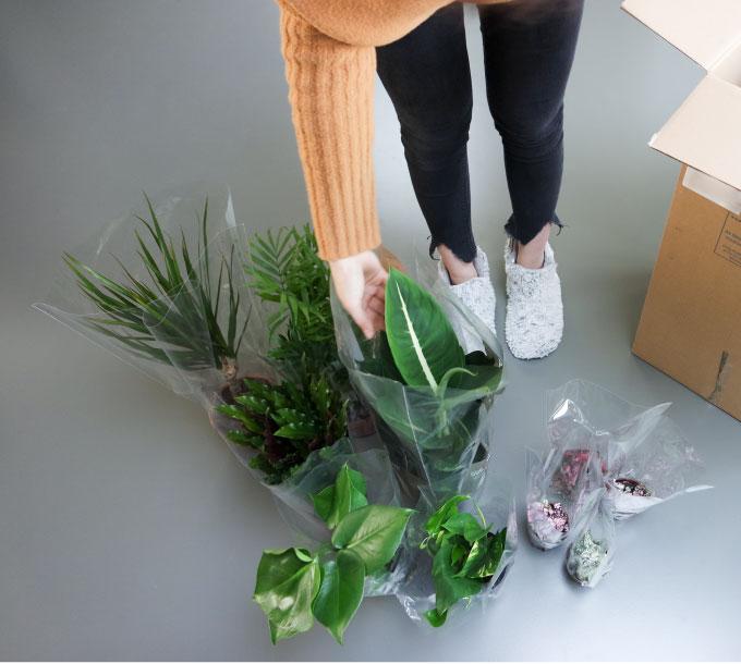 Tienda online plantas