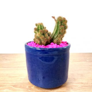 Cactus Flor 1RA