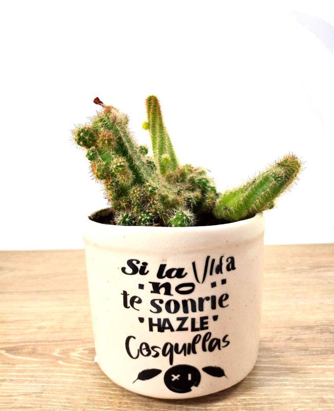 plantas ornamentales en Colombia suculentas Colombia