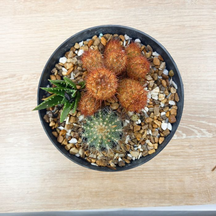 plantas ornamentales Colombia plantas pequeñas para oficina