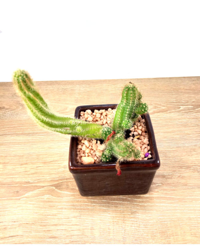 venta de suculentas Bogotá venta de cactus Bogotá
