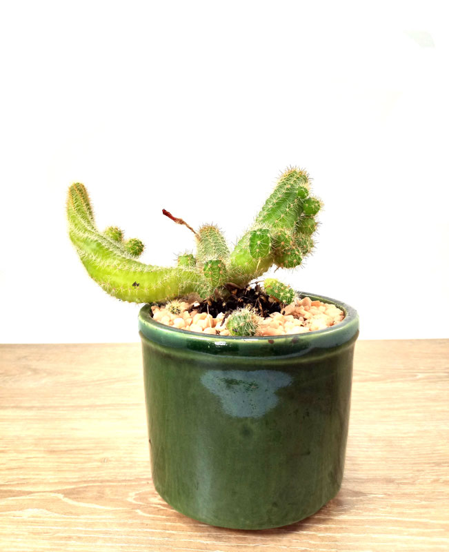 plantas de vivero plantas suculentas Bogotá