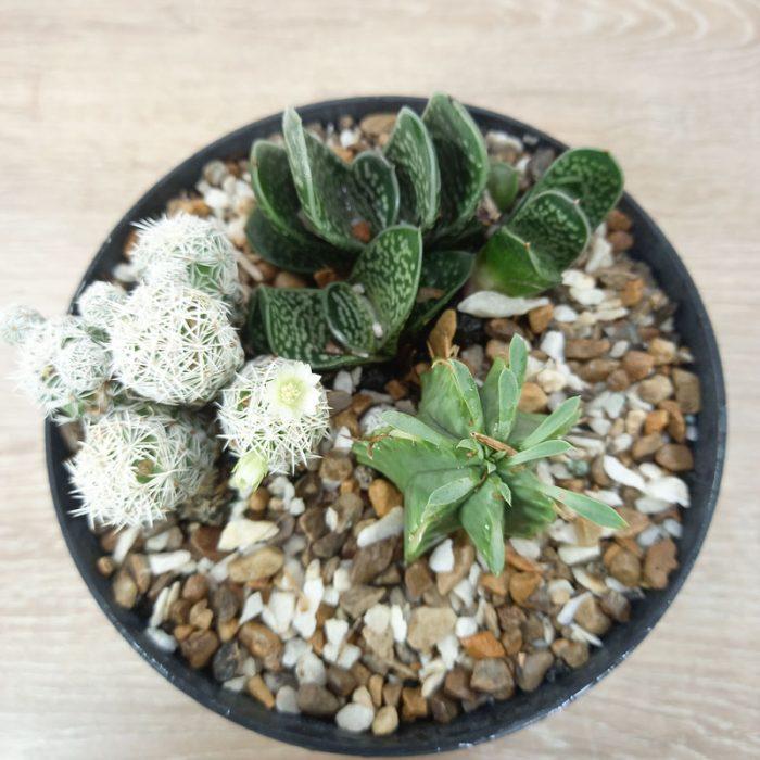 plantas para jardines exteriores curazao flor