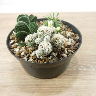 Jardin cactus RF1-2