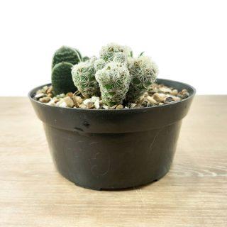 Jardin cactus RF1