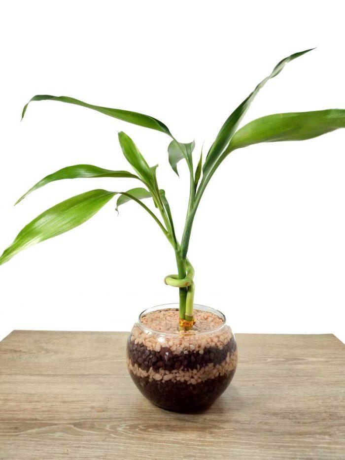 plantas en Bogotá entrega de regalos a domicilio