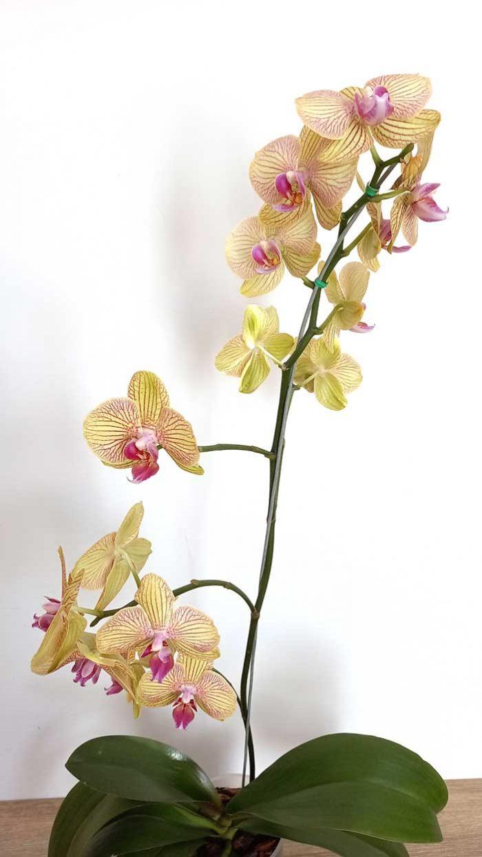 orquídeas bogota