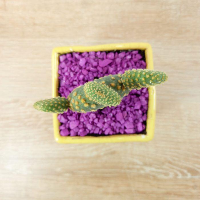 planta novio árbol con flores