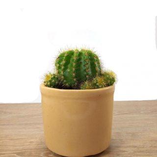 cactus en flor 9RB