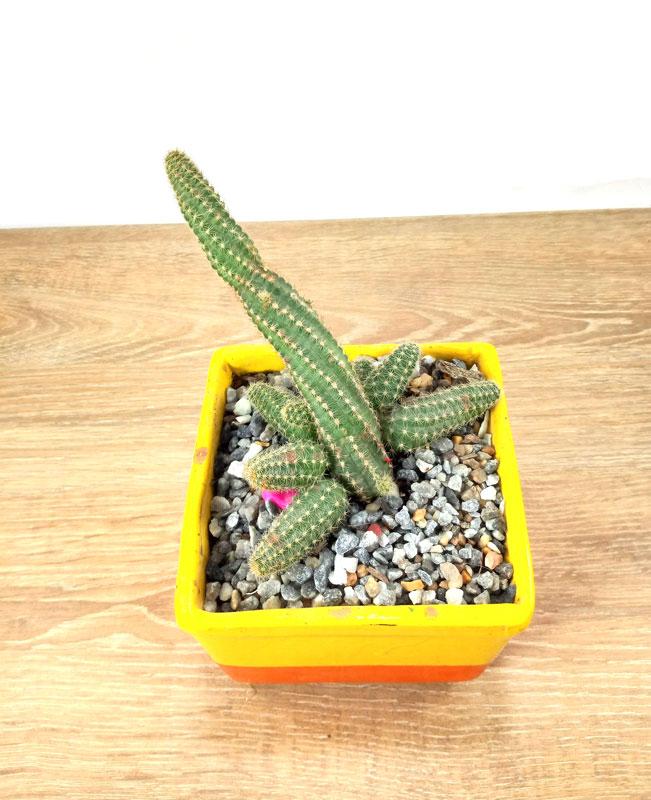 las plantas con semillas el vivero
