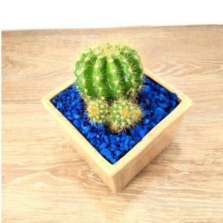 cactus flores 9CB-1