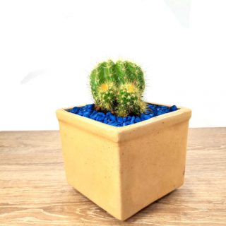 cactus flores 9CB