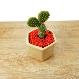 plantas naturales de planta tienda
