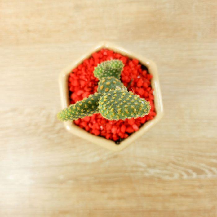 novio planta arboles colombianos