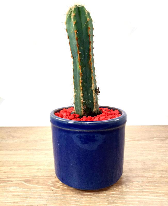 vivero catalogo de plantas de Colombia