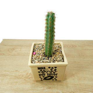 cactus y suculentas 2CB1-2