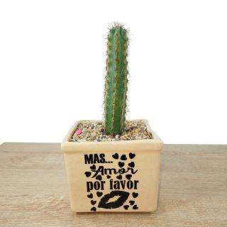 cactus y suculentas 2CB1