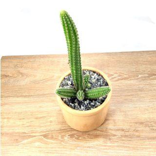 cactus y suculentas 7RB-1