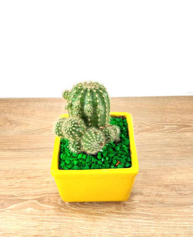 viveros en cucuta de plantas
