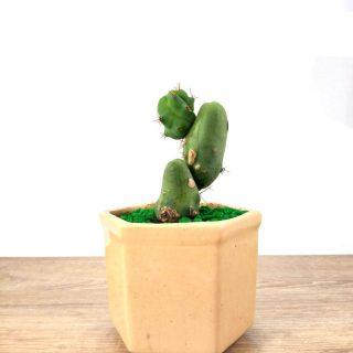 cuidados del cactus 5HB