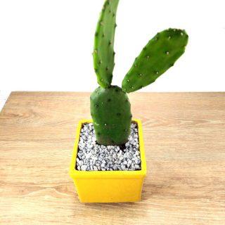 flor cactus 8CA-1