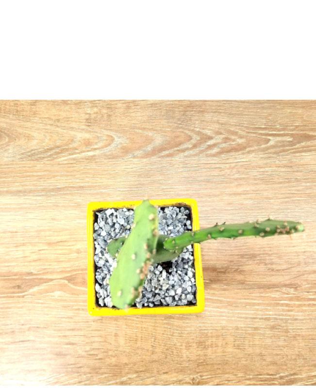 plantas en Bogotá paginas de ventas online Colombia