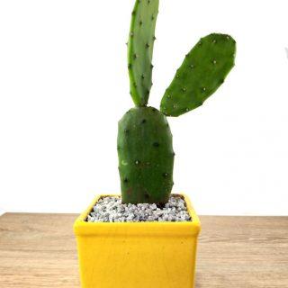 flor cactus 8CA