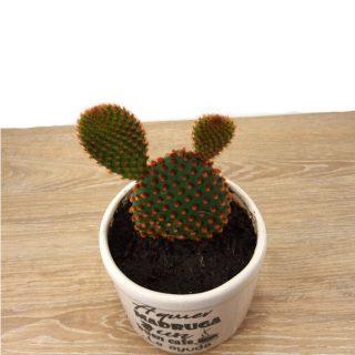 flores cactus 4RB-1