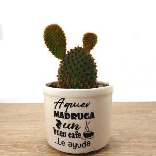 flores cactus 4RB