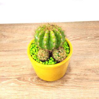 flores cactus 9RA-1