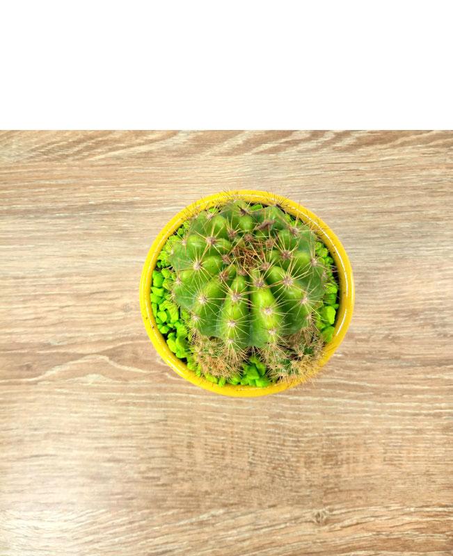 plantas para jardines exteriores semillas de coca
