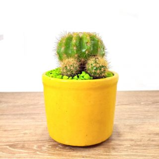 flores cactus 9RA