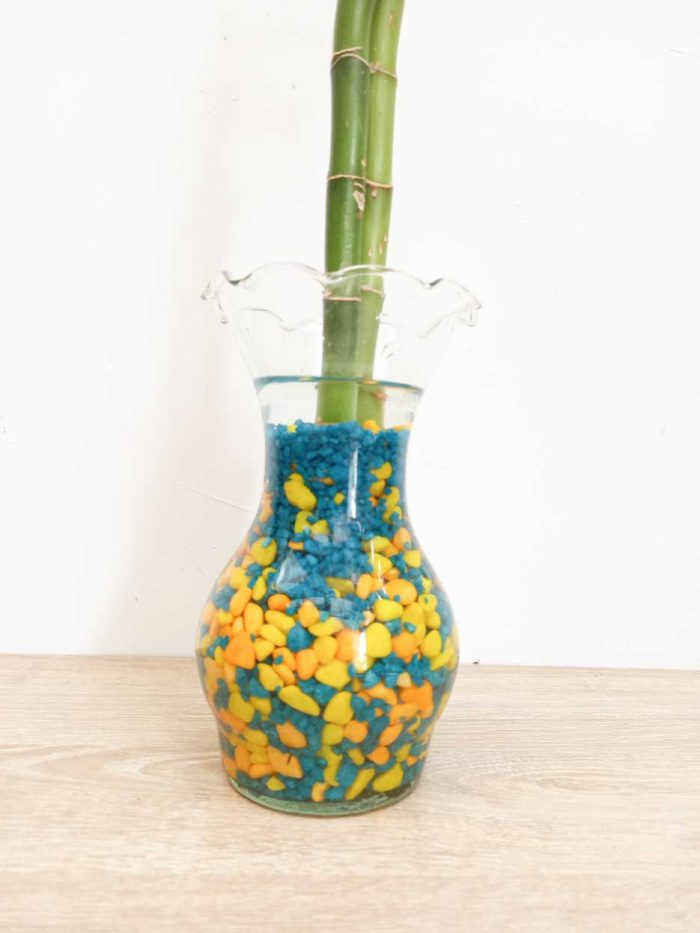 dracena sanderiana lucky bamboo