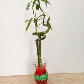 lucky-bambu-donde-comprar