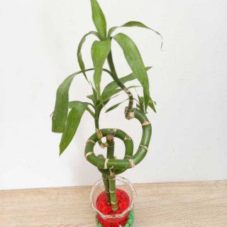 lucky-bambu-donde-comprar_1
