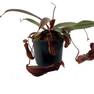 plantas vivas 1