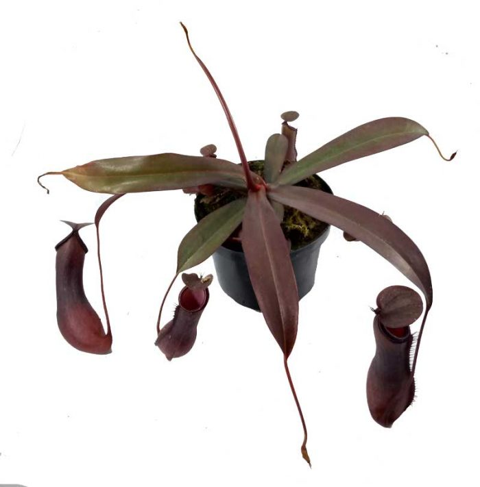 el bosque vivero arboles ornamentales Colombia