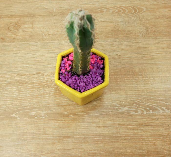 planta novios Penta planta