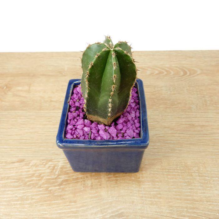plantas lindas producto vectorial online