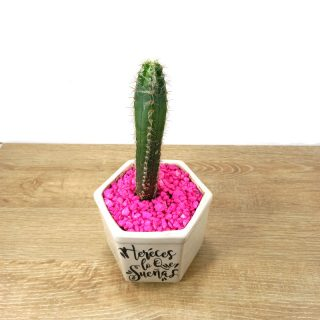 suculentas y cactus 2HB-1