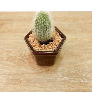 suculentasmini y cactus 1HA-1