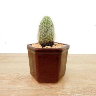 suculentasmini y cactus 1HA